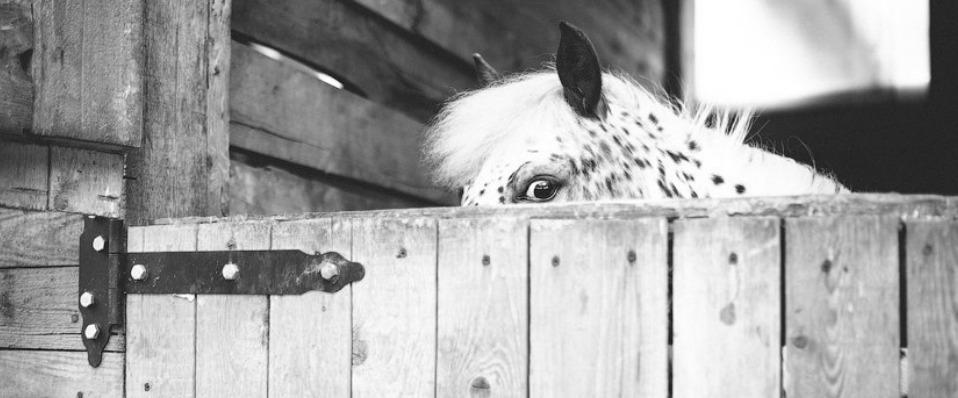 Девушка с лошадкой2