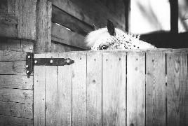 Девушка с лошадкой411